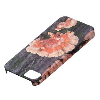 木の腐敗 iPhone SE/5/5s ケース