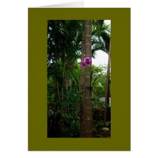 木の花、Bahama島 カード