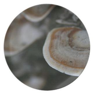 木の菌類 プレート
