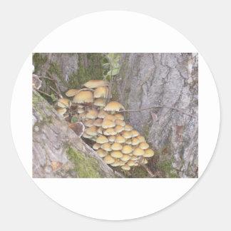 木の菌類 ラウンドシール