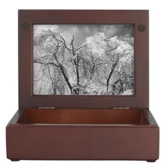 木の衣服の冬 宝石箱