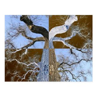 木の郵便はがきの反対の鏡 ポストカード