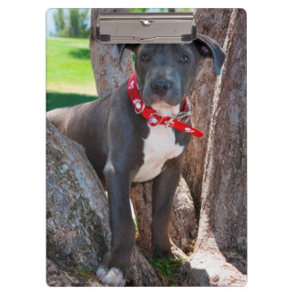 木の(犬)スタッフォードのブルテリアの子犬 クリップボード