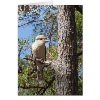 木のKookaburra カード