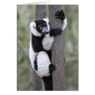 木のRuffedの白黒Lemur カード