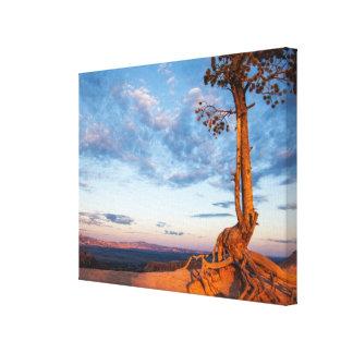 木は棚、ブライス渓谷の国立公園にしがみつきます キャンバスプリント