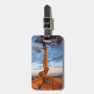 木は棚、ブライス渓谷の国立公園にしがみつきます ラゲッジタグ