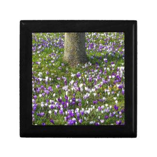 木を持つ春の草の花分野のクロッカス ギフトボックス