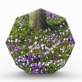 木を持つ春の草の花分野のクロッカス 表彰盾