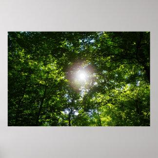 木を突破 ポスター