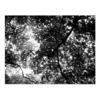 木を通したライト ポストカード