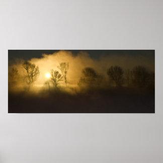 木を通した太陽光線 ポスター