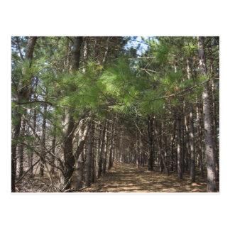 木を通して森林を見て下さい ポストカード