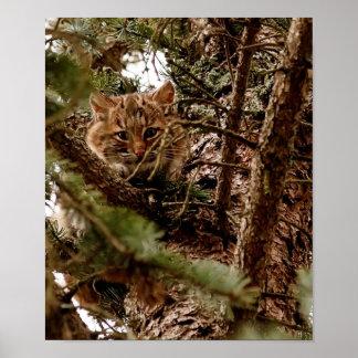 木ポスターのかわいいボブキャットの子ネコ ポスター