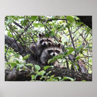 木ポスターの愛らしく若いアライグマの組 ポスター
