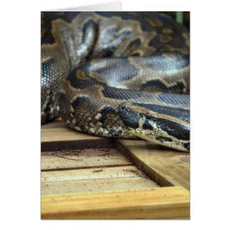 木枠で去られて見ている大蛇のヘビ カード