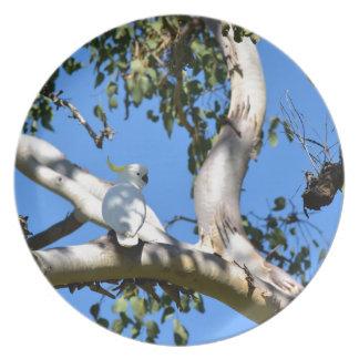 木田園クイーンズランドオーストラリアのオウム プレート