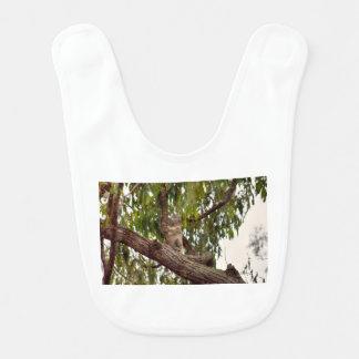 木田園クイーンズランドオーストラリアのコアラ ベビービブ