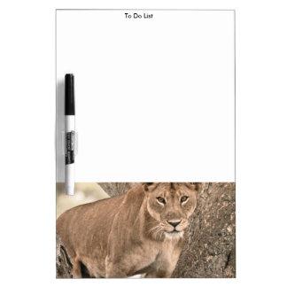 木登山のライオン、ウガンダアフリカ ホワイトボード