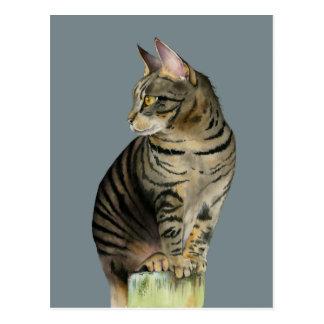"""木製のポストのイラストレーションの""""眺望""""の虎猫猫 ポストカード"""