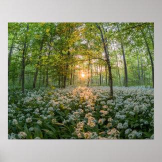 木間の太陽 ポスター