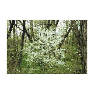 木間の白 キャンバスプリント