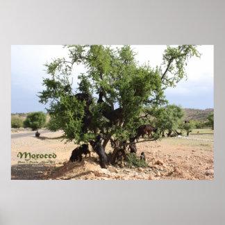 木-アルガンの木、モロッコのヤギ ポスター