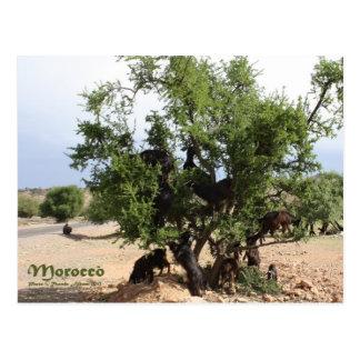 木-アルガンの木、モロッコのヤギ ポストカード