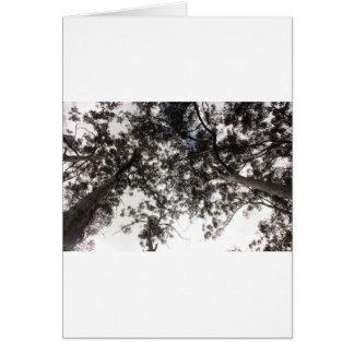 木 カード