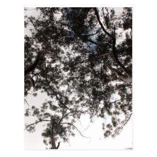 木 ポストカード
