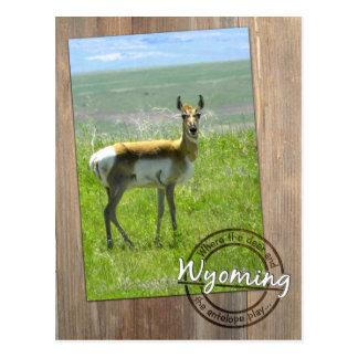 木-ワイオミングWY米国の女性のカモシカの写真 ポストカード