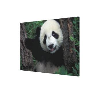木、Wolongの四川地域を持つパンダの幼いこども、 キャンバスプリント