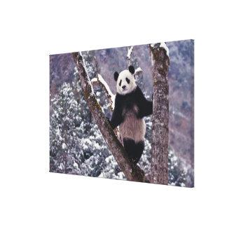 木、Wolong、四川に立っているジャイアントパンダ キャンバスプリント
