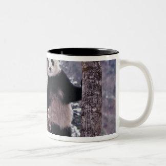 木、Wolong、四川に立っているジャイアントパンダ ツートーンマグカップ