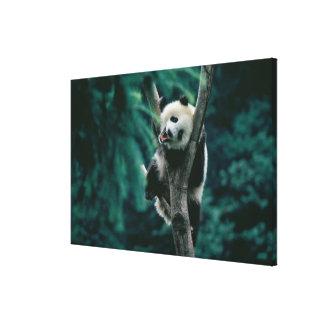 木、Wolong、四川の中国のパンダの幼いこども キャンバスプリント