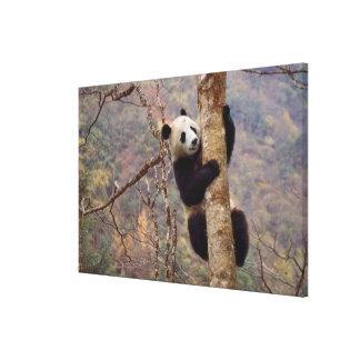 木、Wolong、四川の中国のパンダ キャンバスプリント