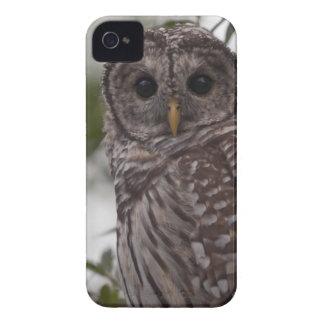 未成年者のアメリカフクロウ(溝彫りのvaria) Case-Mate iPhone 4 ケース