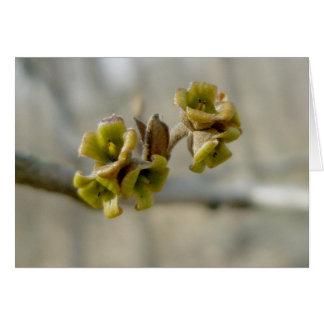未知の木の花-春 カード