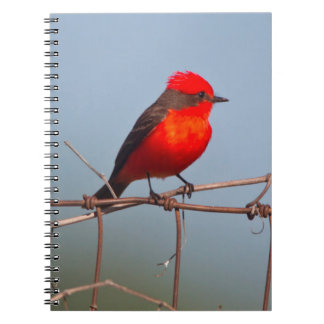 朱色Flycatcher (Pyrocephalus Rubinus) ノートブック