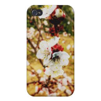 杏子の花 iPhone 4/4S カバー