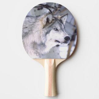 材木のオオカミ、イヌ属ループス、映画動物のユタ) 卓球ラケット