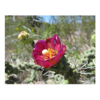 杖のChollaの砂漠の花 ポストカード