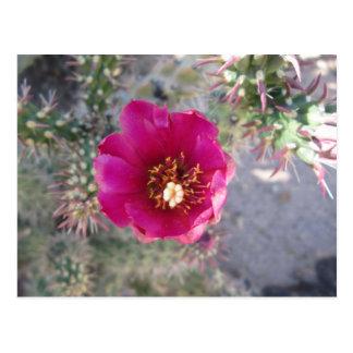 杖のChollaの花の紫色 ポストカード