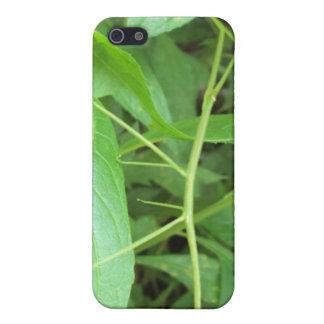 杖 iPhone 5 COVER