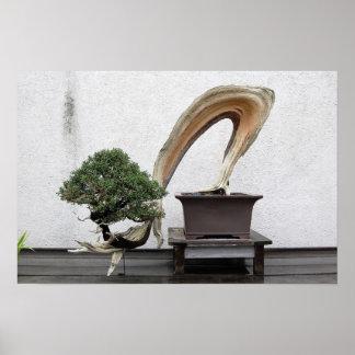 杜松の盆栽 ポスター