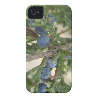 杜松実のブラックベリーのはっきりしたな穹窖 Case-Mate iPhone 4 ケース
