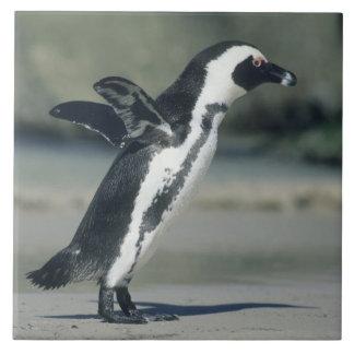 来ているアフリカのペンギン、(Spheniscusのdemersus) タイル