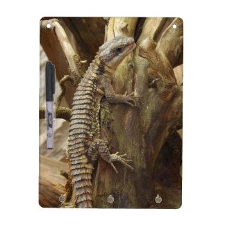 東にアフリカ人によってとげだらけ後につかれる熱帯取り巻かれたトカゲ ホワイトボード