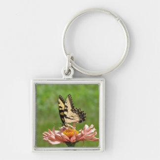 東のトラのアゲハチョウの蝶Keychain シルバーカラー正方形キーホルダー