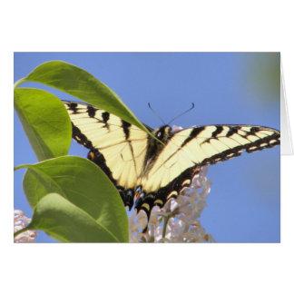 東のトラのアゲハチョウは飛行を取ります カード